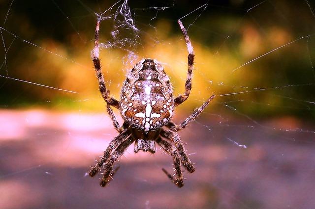 spider-3305322_640