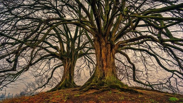 tree-3097419_640